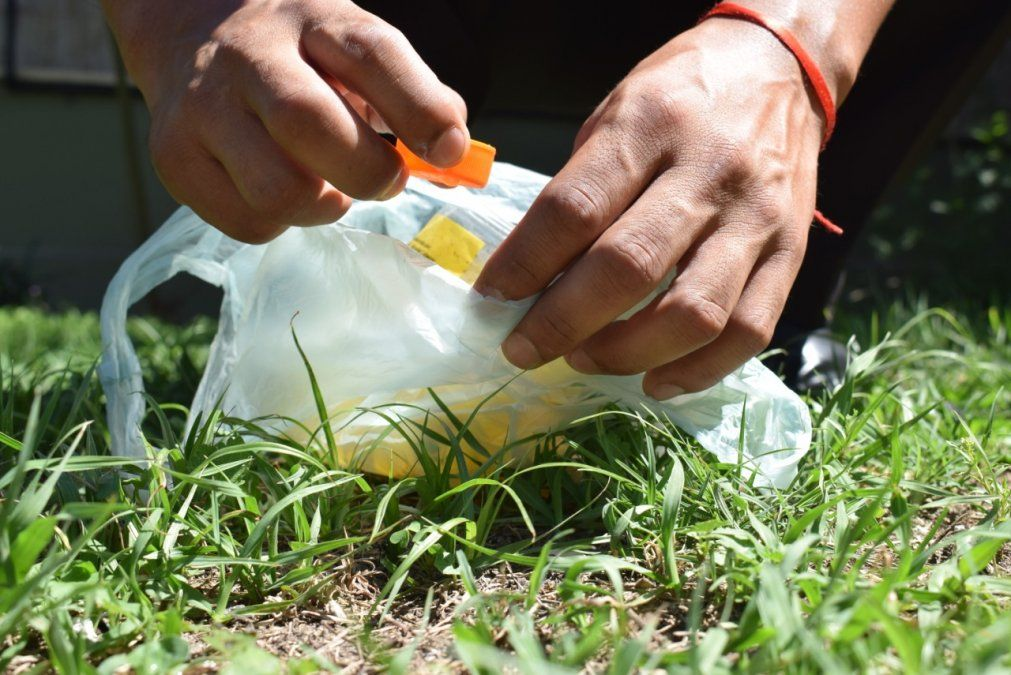 Cualquier objeto que pueda acumular agua es potencial criadero del mosquito transmisor del dengue