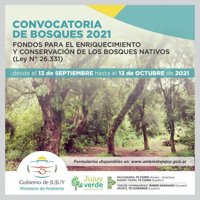 Enriquecimiento y conservación de los Bosques Nativos de Jujuy