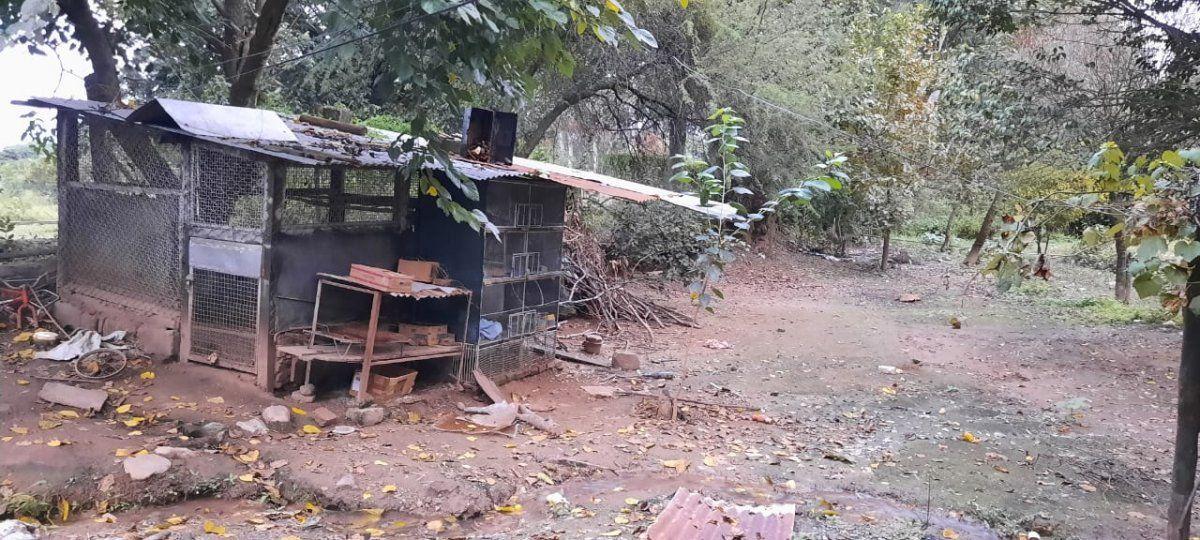 24 aves son rescatadas en San Salvador de Jujuy