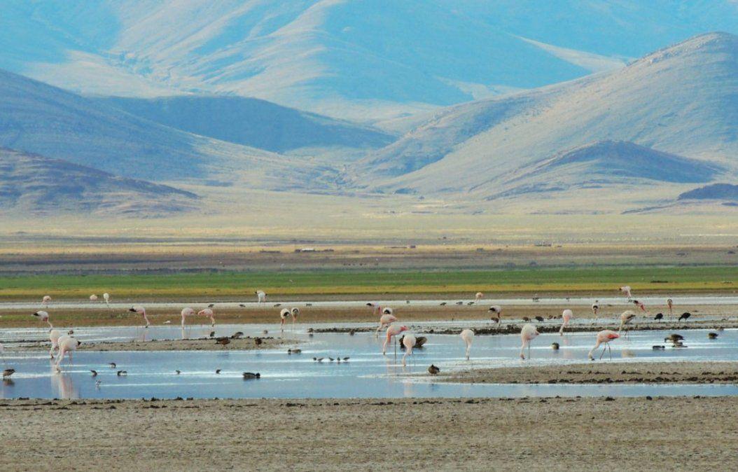 Más allá de Ramsar, los humedales de Jujuy