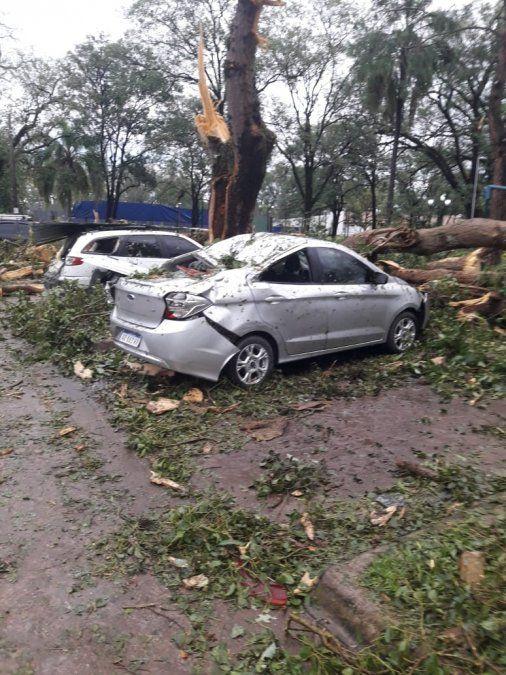 Temporal provocó caída de árboles y daños materiales