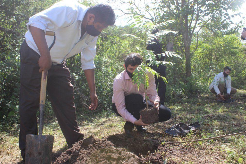 Lanzamiento del Plan Fomento al verde Urbano