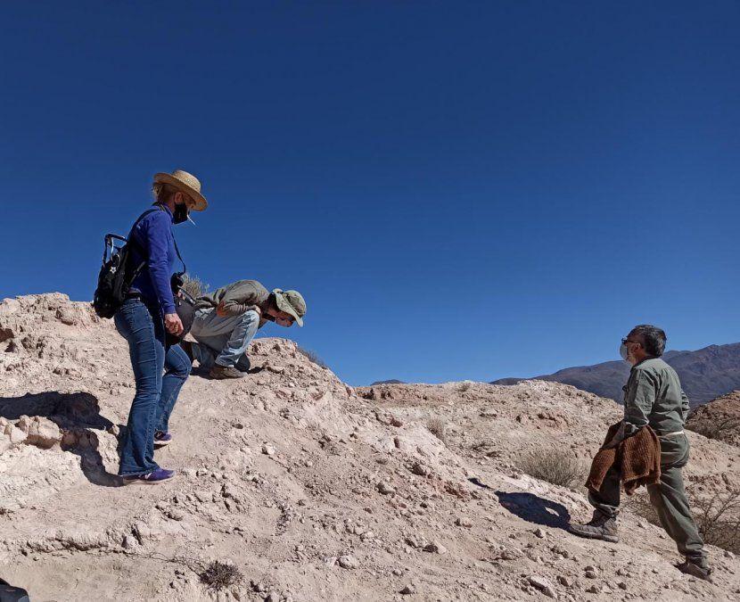 Hallaron restos fósiles de mamíferos en Humahuaca
