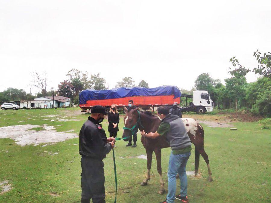 Por resultado positivo al test de anemia infecciosa equina se procedió a efectuar la eutanasia de dos caballos