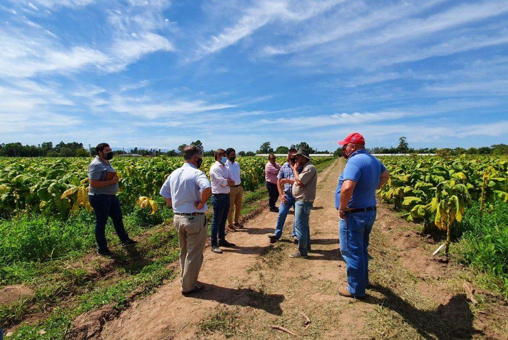 Trabajo conjunto para mejorar la producción del sector tabacalero